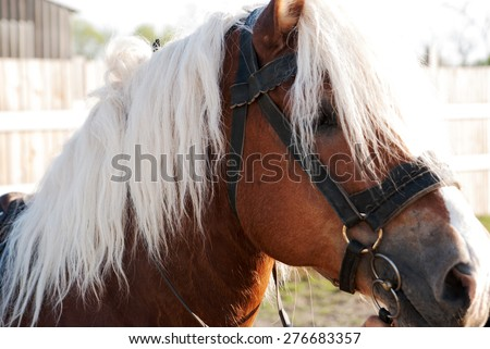 beautiful brown horse with white mane in the light of the sun