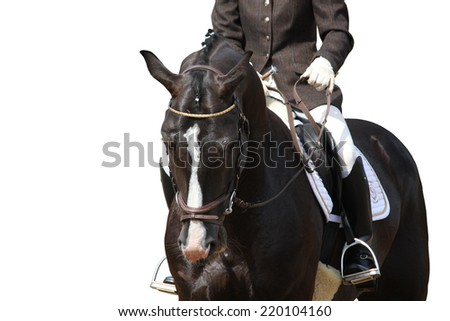 Beautiful brown sport horse portrait isolated on white - stock photo