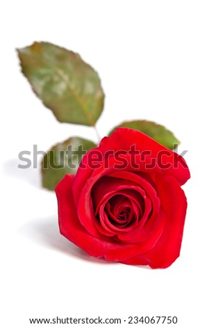 beautiful bud of red rose isolated on white background - stock photo