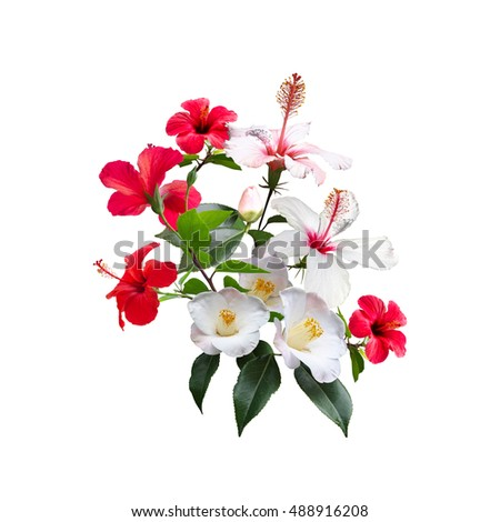 Beautiful Bunch Of Blossom Flowers Hibiscus Floral Element With Red And White