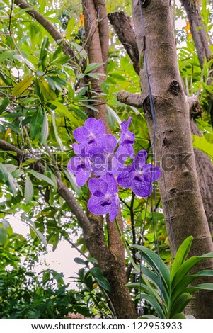 Beautiful bunch of purple orchid in garden, Phuket, Thailand