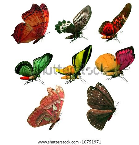 Beautiful Butterflies side view isolated - stock photo