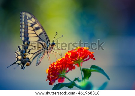 Beautiful butterfly and flowers. Summer, spring mood.