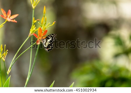 Beautiful butterfly and lovely flower on natural light background in  - stock photo