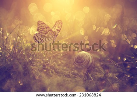 Beautiful butterfly and wet grass - stock photo