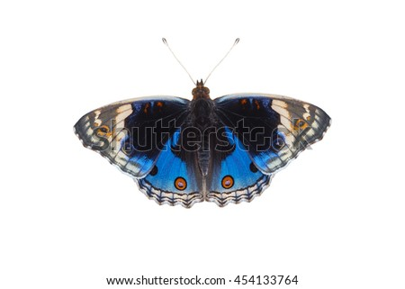 Beautiful butterfly, Blue Pansy butterfly flying on white background