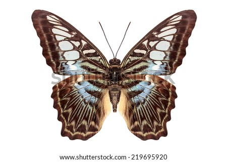 beautiful butterfly flying isolate on white background with clipping path - stock photo