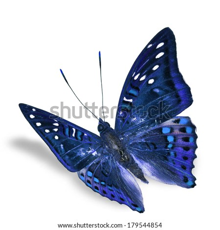 Beautiful Butterfly flying isolated on white background, Soft shadow underneath.  - stock photo