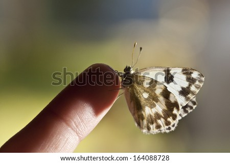 beautiful butterfly in a finger - stock photo