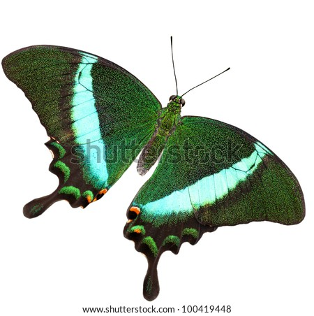 Beautiful butterfly isolated on white background - stock photo