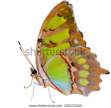 Beautiful butterfly - isolated on white background - stock photo