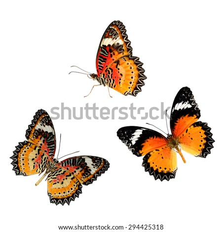Beautiful butterfly Leopard Lacewing isolated on white background. - stock photo