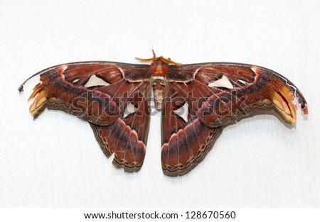 beautiful butterfly on a white background