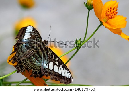 beautiful butterfly on a yellow flowers
