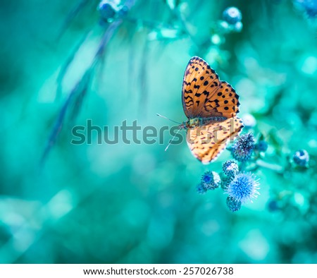Beautiful butterfly on flower - stock photo