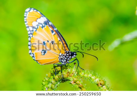 Beautiful butterfly on flower in public park, Thailand. - stock photo