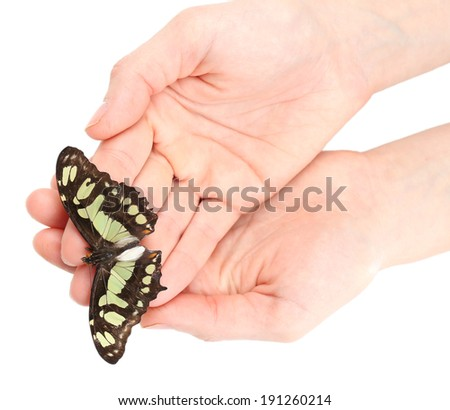 Beautiful butterfly on hands, isolated on white