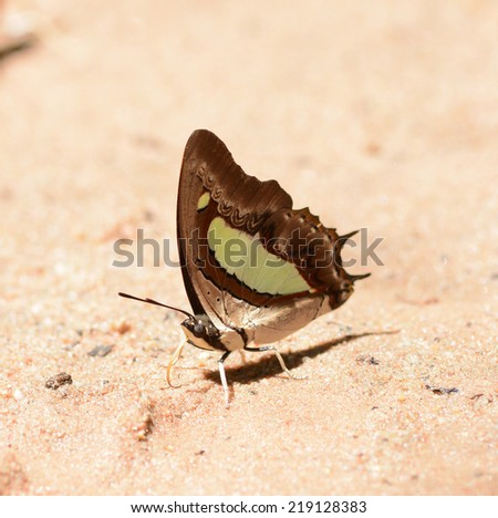 Beautiful butterfly on the ground