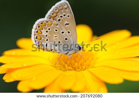 beautiful butterfly on yellow flower                                     - stock photo