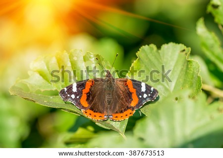 Beautiful Butterfly rest on tree leaves in summer