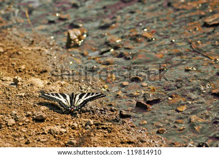 Beautiful Butterfly Resting Beside Stream - stock photo