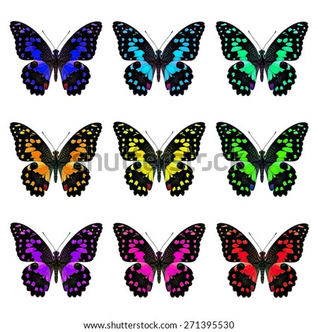 Beautiful butterfly, set of Lime Butterflies in fancy color isolated on white background - stock photo