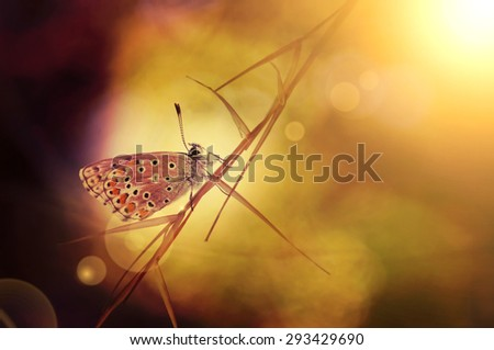 Beautiful butterfly sitting on a grass in sunrise - stock photo