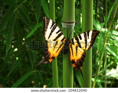 beautiful butterfly sitting on the bamboo - stock photo