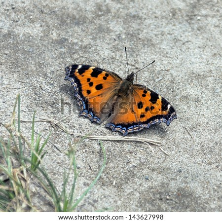 Beautiful butterfly sitting on the wet ground - stock photo