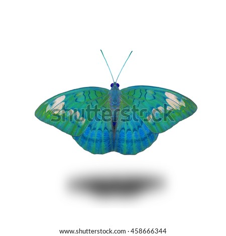 Beautiful butterfly , the Clipper Butterfly in fancy color profile isolated on white background