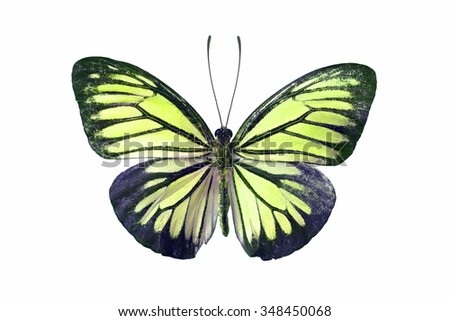 Beautiful butterfly wing isolated on white background