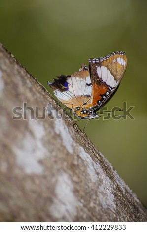 Beautiful butterfly wings on a tree
