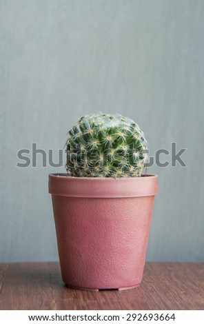 beautiful cactus on the wooden table