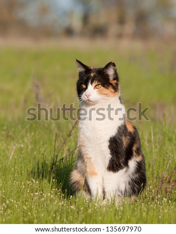 Beautiful calico cat in light green spring grass - stock photo