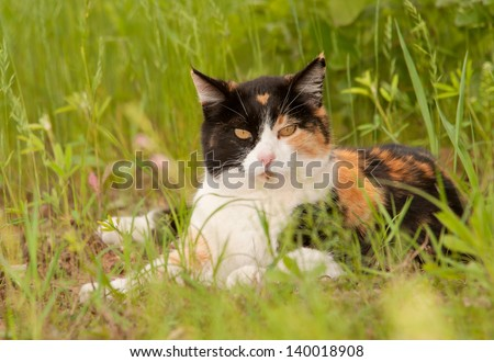 Beautiful calico cat resting in spring grass, looking at the viewer - stock photo