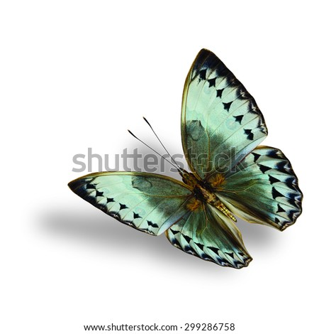 Beautiful Cambodia Junglequeen butterfly in flying post in natural color profile on white background with soft shadow beneath - stock photo