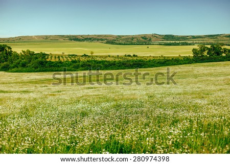 Beautiful camomile field on a background of mountains and blue sky - stock photo