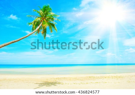 Beautiful Caribbean beach. Beach with palm tree over the sand