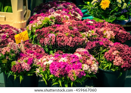 Beautiful carnation flowers selling at an european market