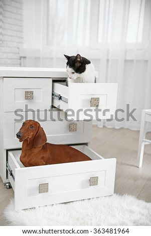 Beautiful cat and dachshund dog   sitting in chest of drawers - stock photo