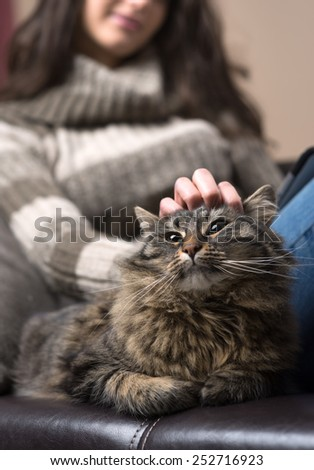 Beautiful cat and young woman lying on a leather sofa