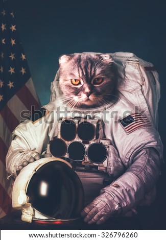 Beautiful cat astronaut. Elements of this image furnished by NASA. - stock photo