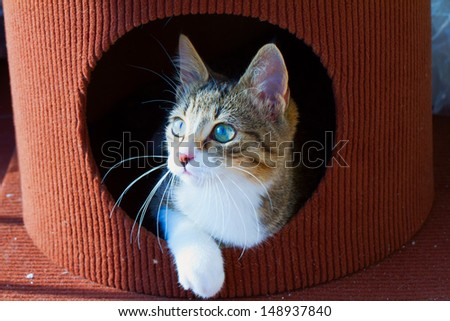 Beautiful cat coming out of a hole - stock photo