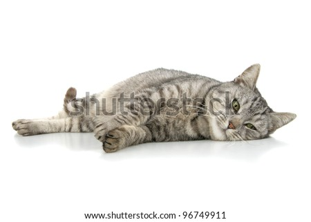 Beautiful cat composedly lies, insulated on white background. - stock photo