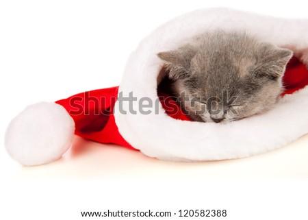 Beautiful cat in a Santa Claus hat - stock photo