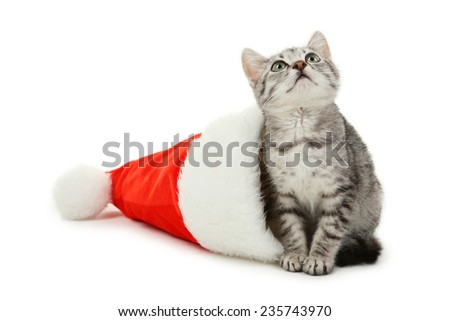 Beautiful cat in christmas hat isolated on white - stock photo