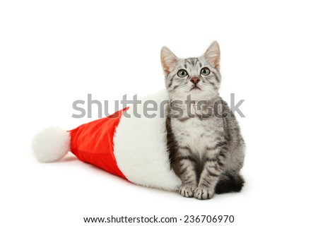 Beautiful cat in christmas hat isolated on white