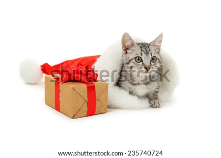 Beautiful cat in christmas hat with gift box isolated on white - stock photo