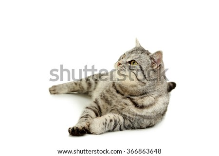 Beautiful cat isolated on a white