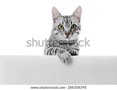 Beautiful cat isolated on white - stock photo